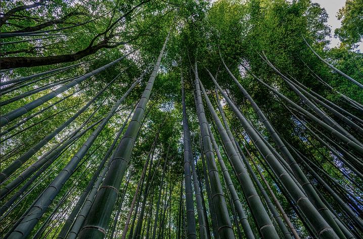 mayumiishikawa_bamboo