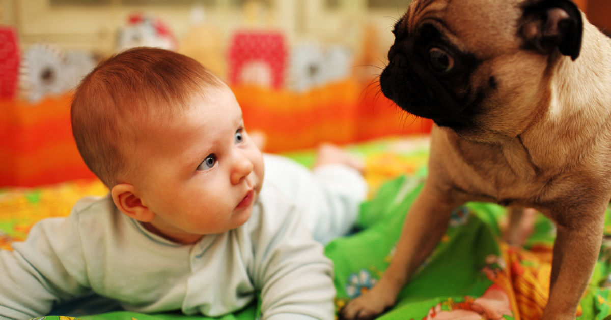 dog-teach