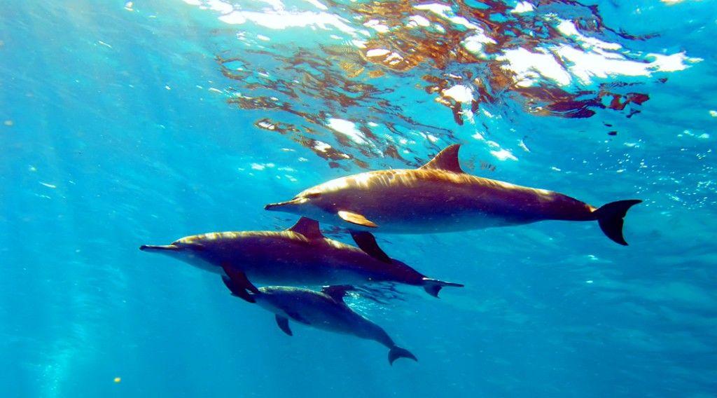 150302_dolphin-surf