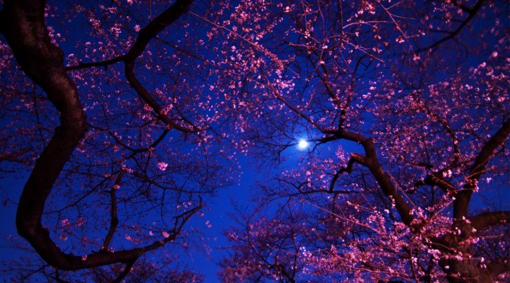 150305_eclipese-sakura