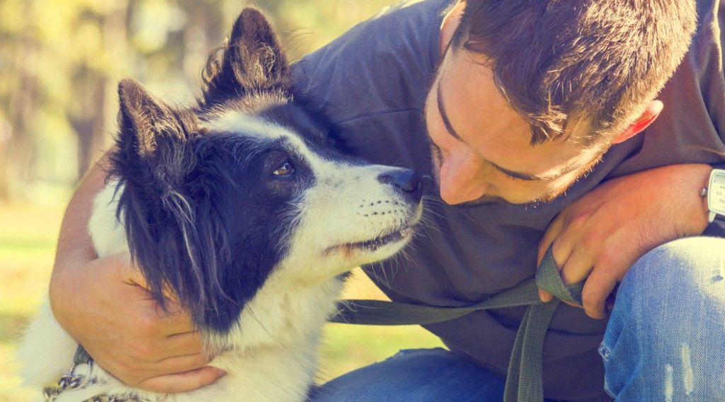 150306_veteran-dogs