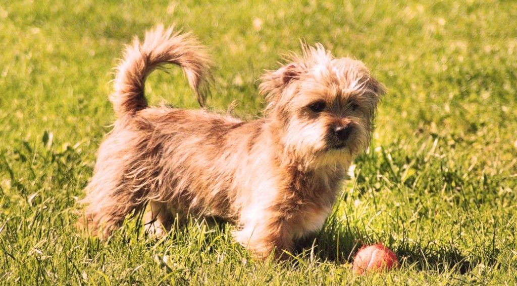 150307_puppy-mill