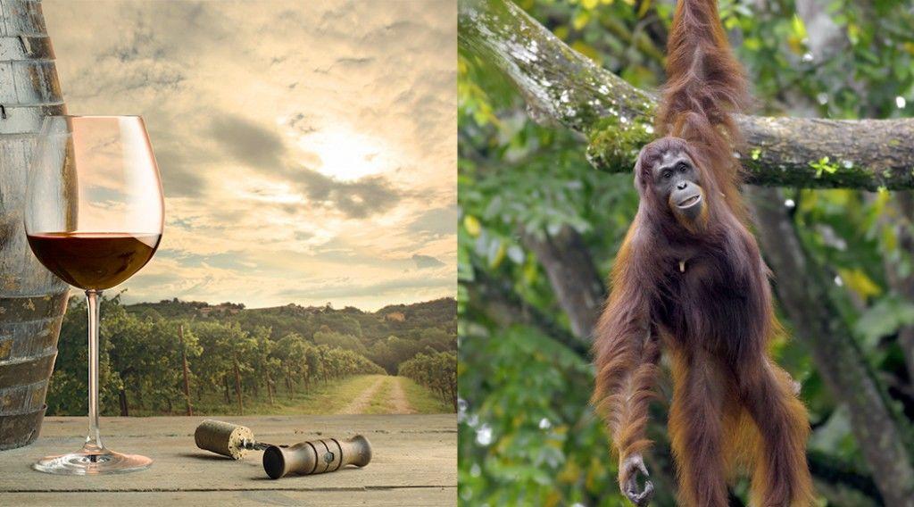 150325_wine-orangutans
