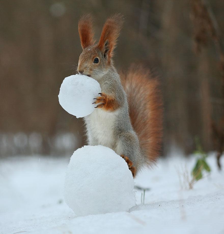 squirrel-photo10
