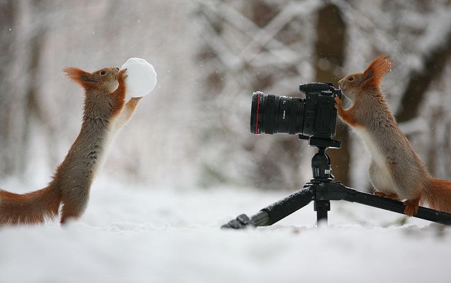 squirrel-photo11