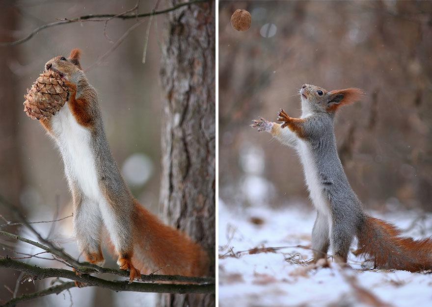 squirrel-photo12
