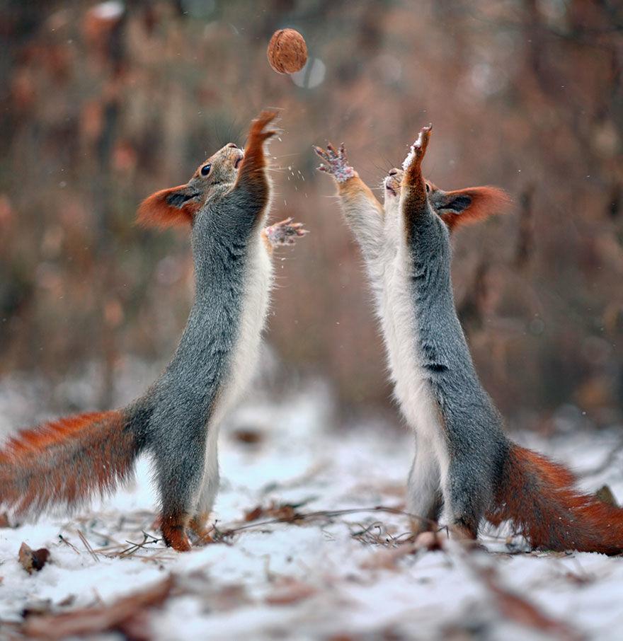 squirrel-photo13