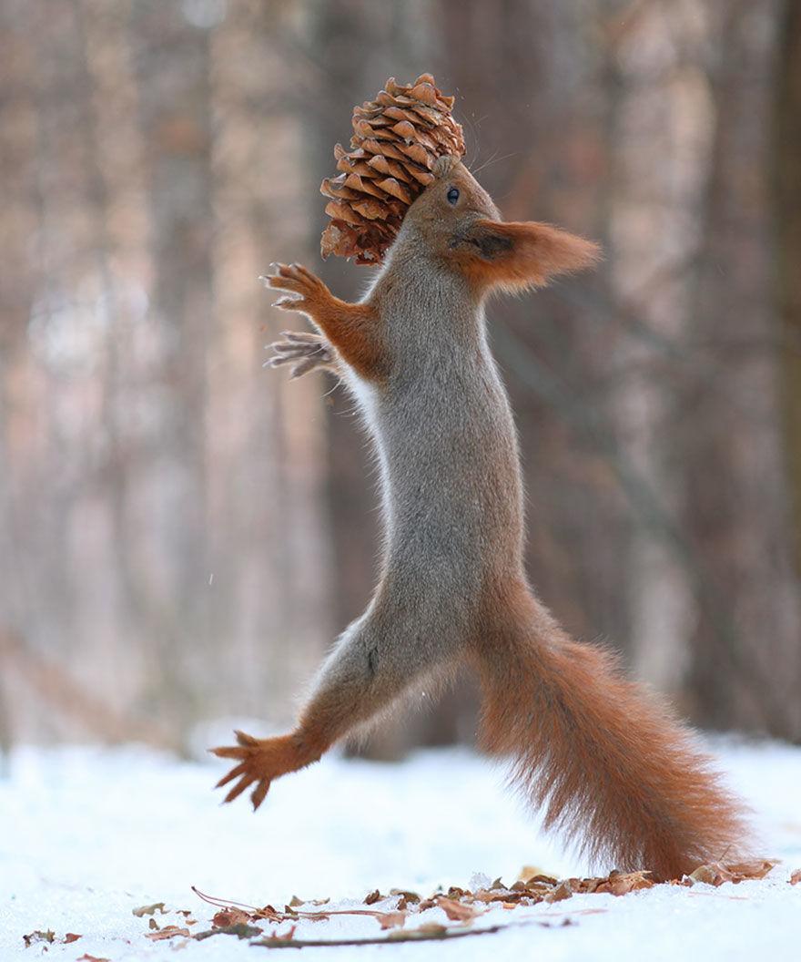 squirrel-photo14