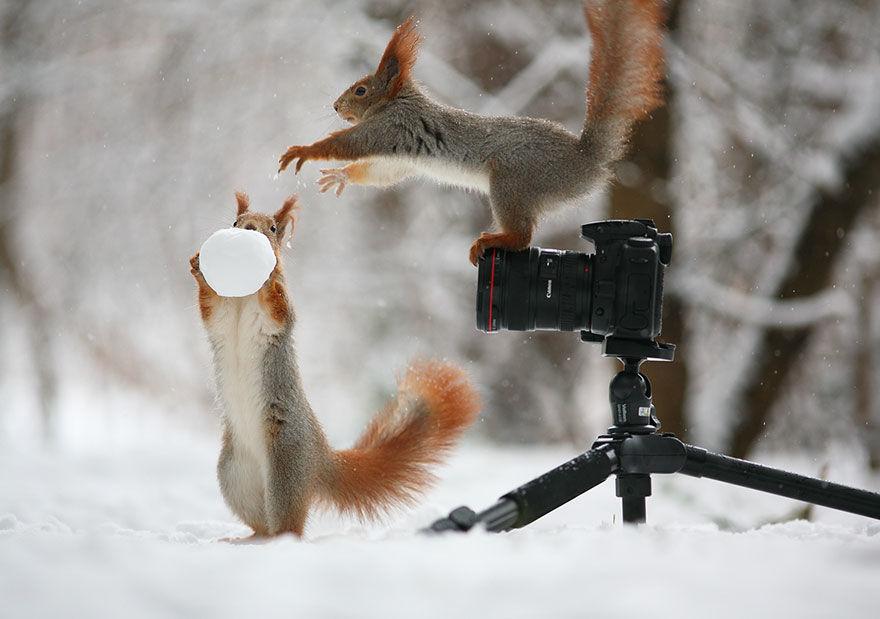 squirrel-photo2