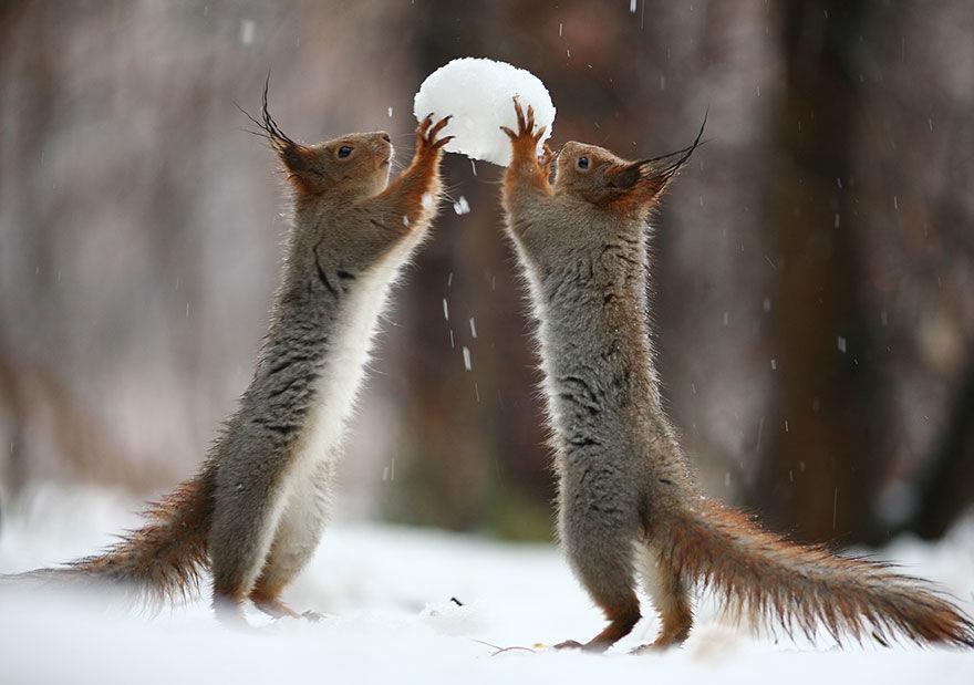 squirrel-photo3