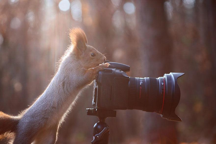 squirrel-photo4