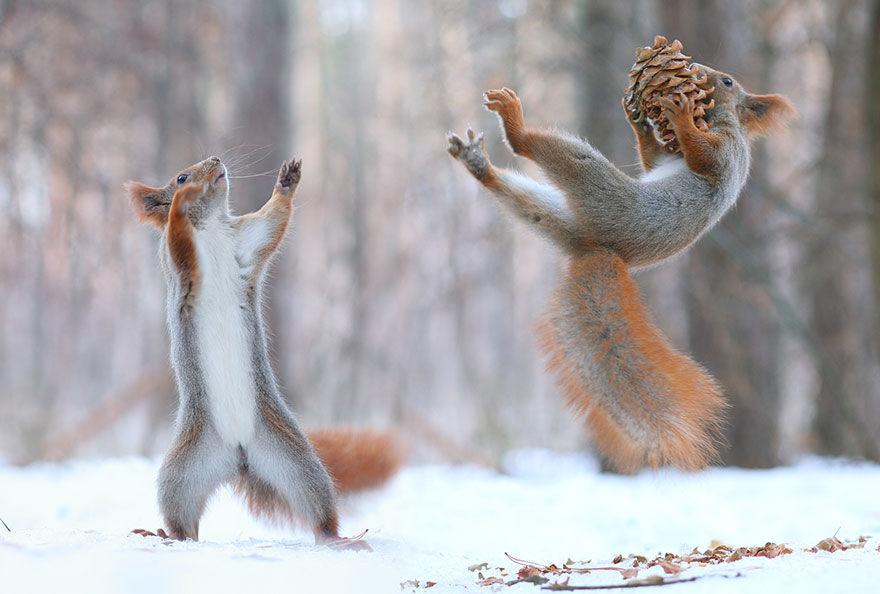 squirrel-photo5