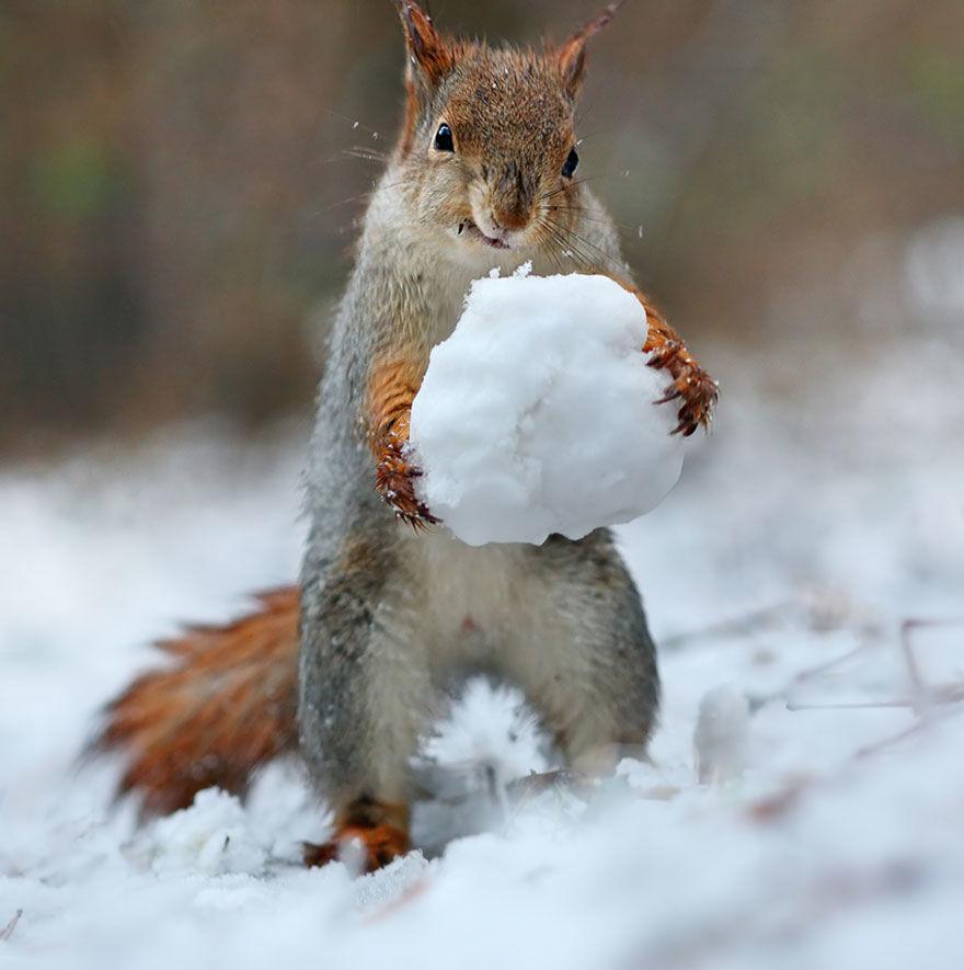 squirrel-photo6