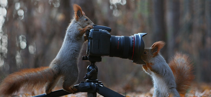 squirrel-photo7