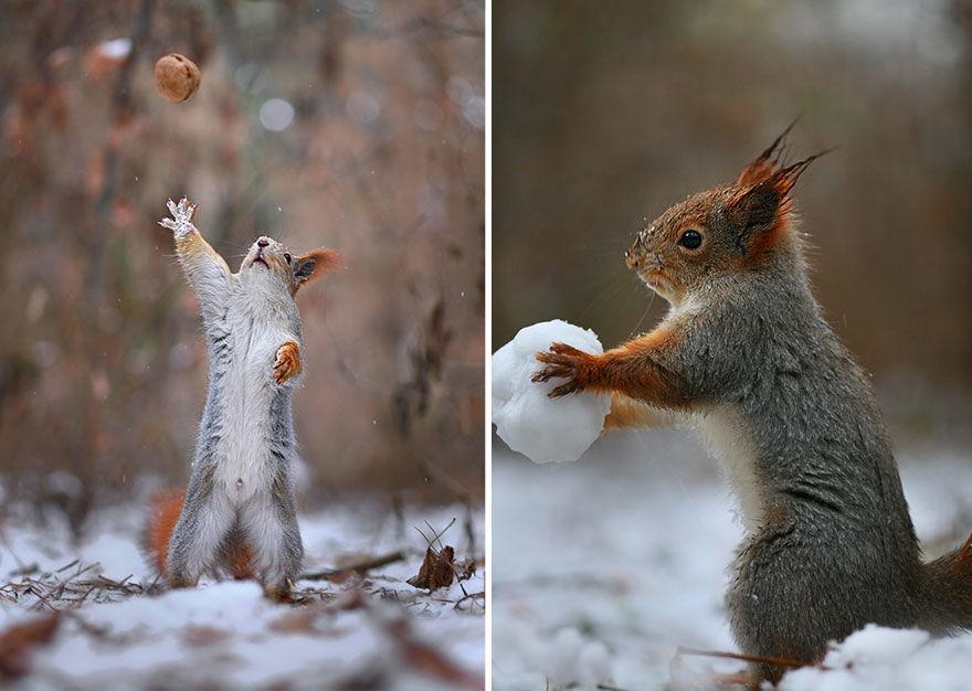 squirrel-photo8