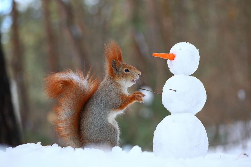 squirrel-photo9
