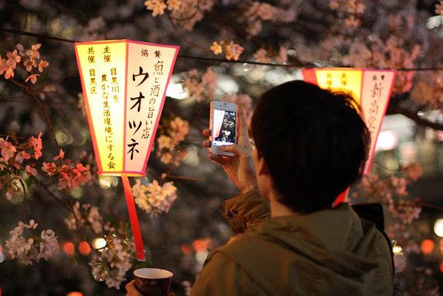 tokyo-cherry-blossoms7