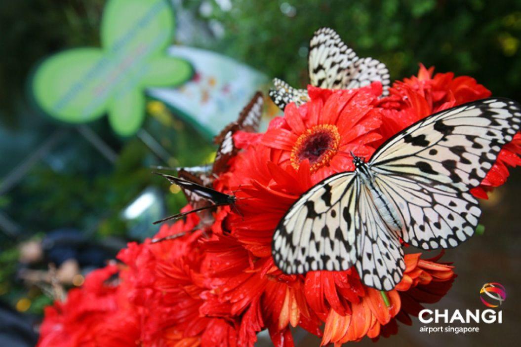 85singo_Terminal-3-Transit-Butterfly-Garden