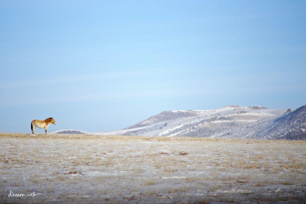85singo_Winter-in-Mongolia2__880