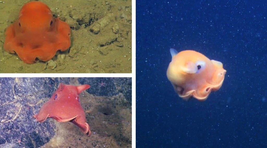150626_adorable-octopus