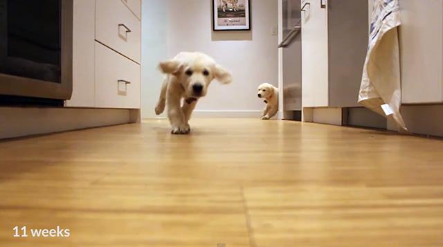 pups-running-2