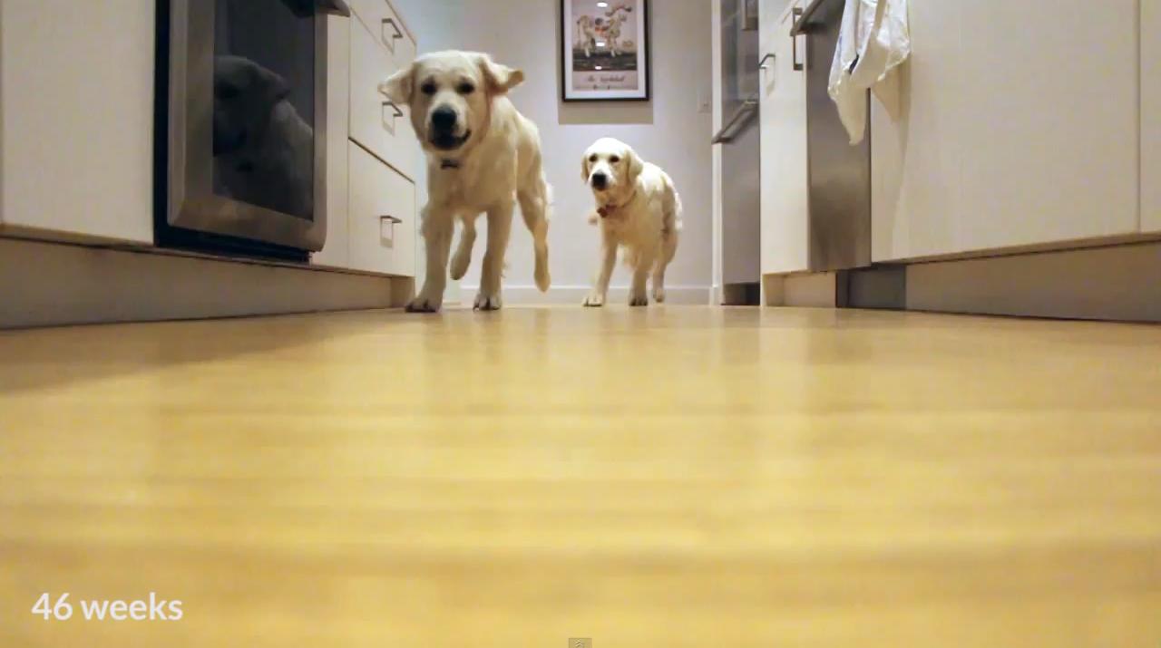 pups-running-5