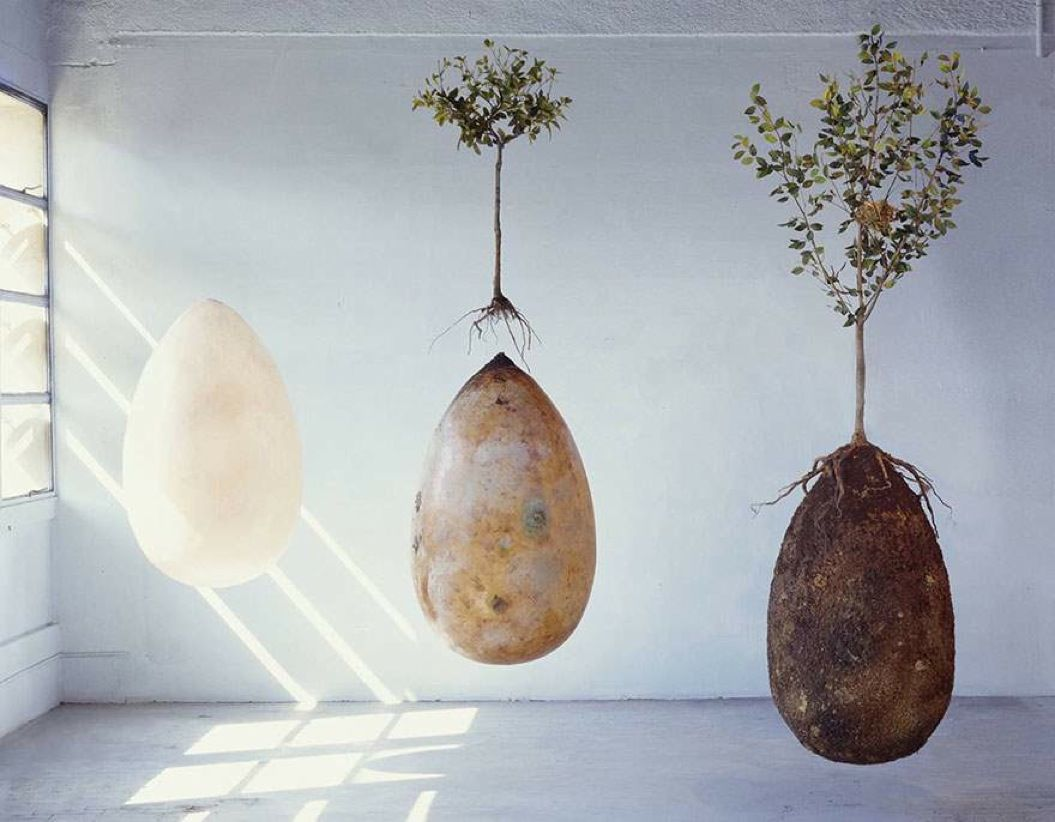 85singo_biodegradable-burial-pod-memory-forest-capsula-mundi-9-Optimized