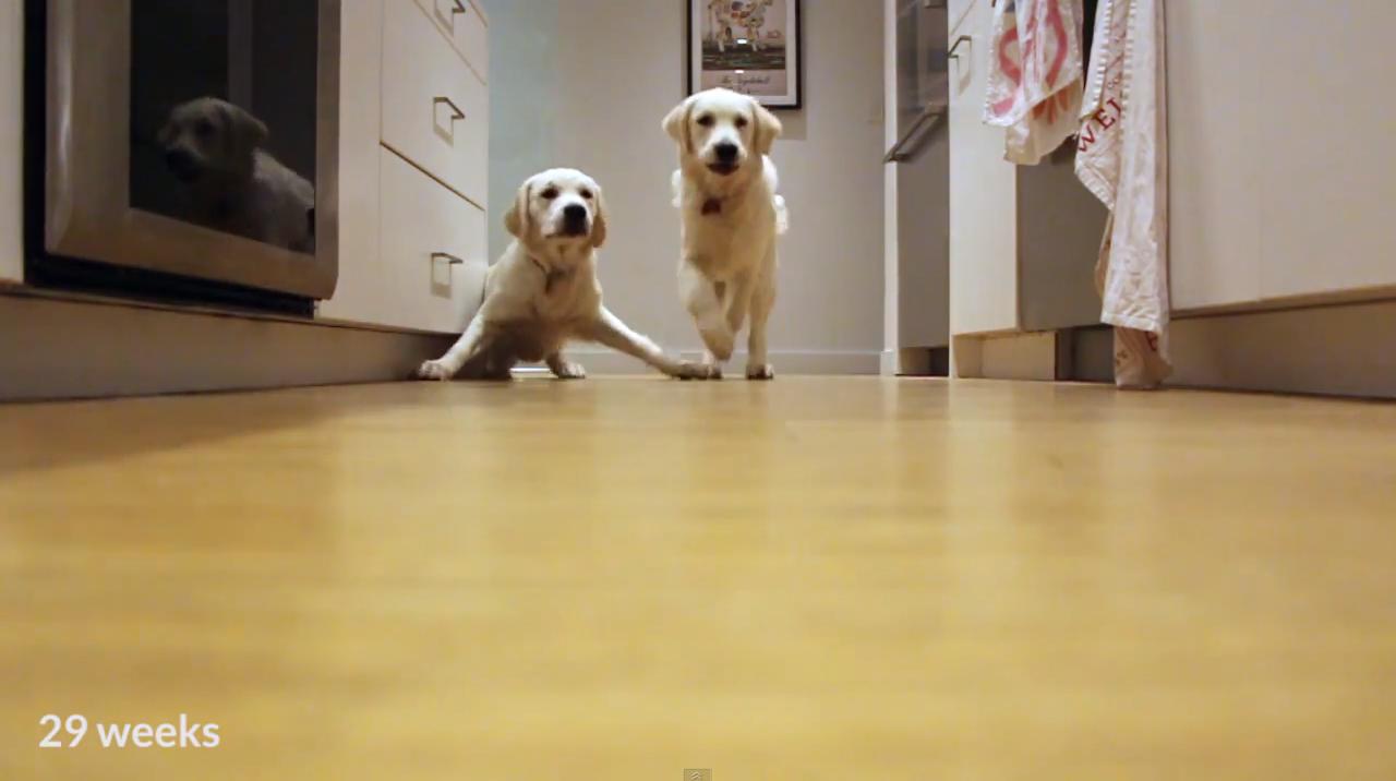 pups-running-4