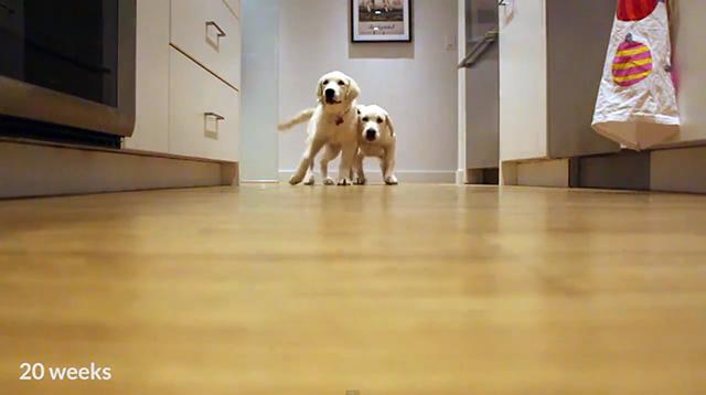 pups-running-3