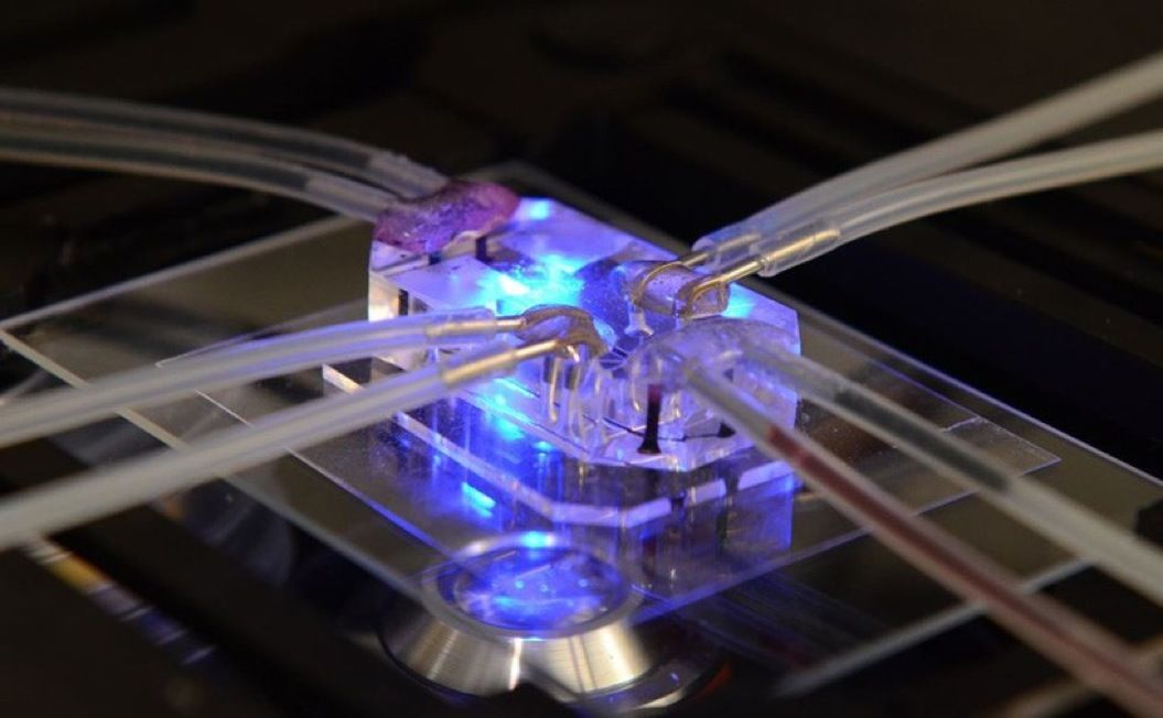 85singo_design-of-the-year-2015-design-museum-human-organs-on-chips-donald-ingber-dan-dongeun-huh-designboom-01-818x506