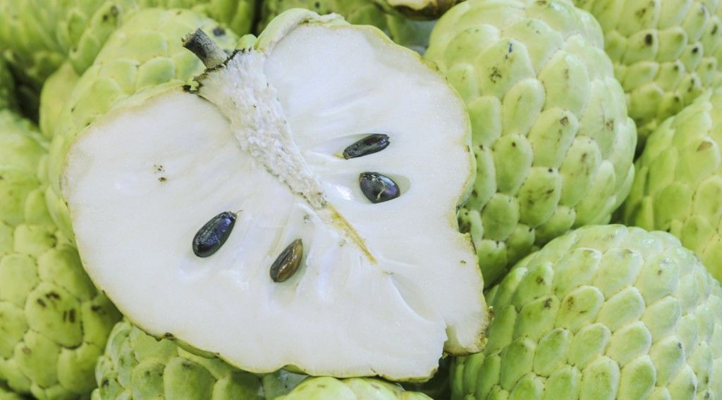Custard apple or Sugar apple fruit