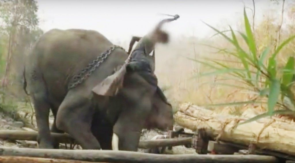 150919_elephant-2