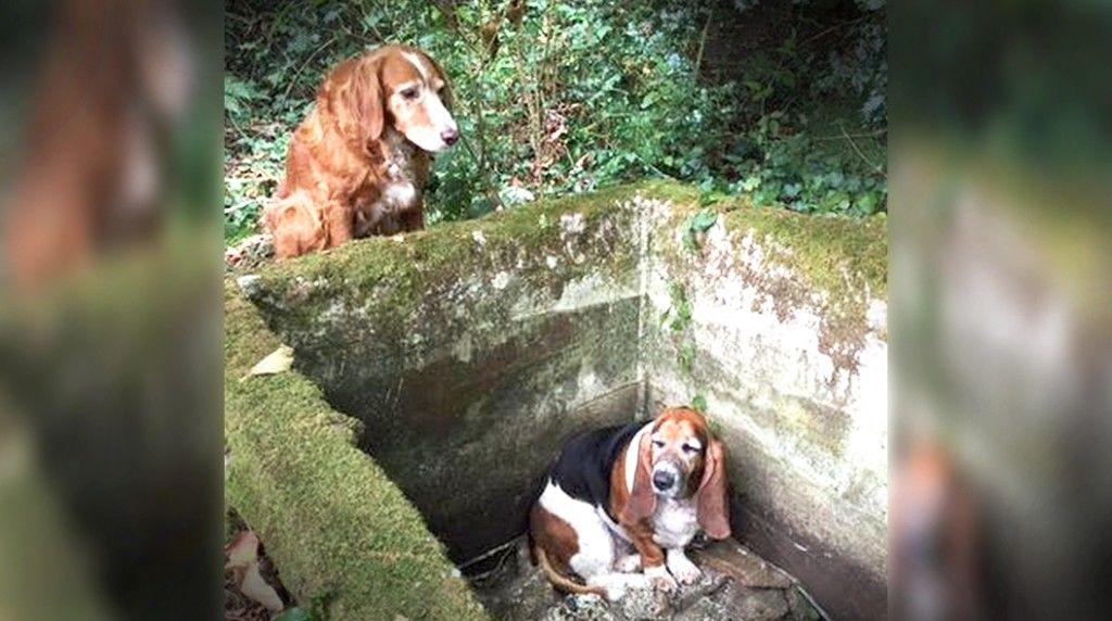 dog-1-week-help1509210-01