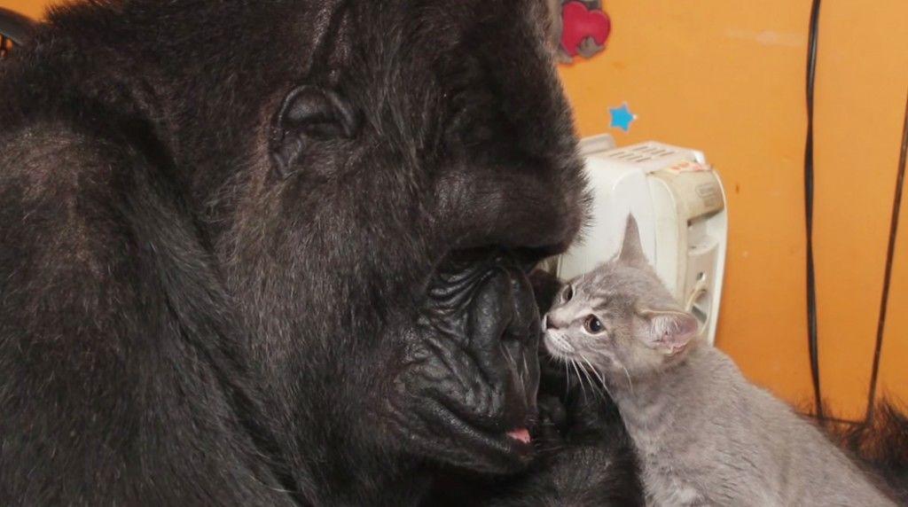 gorillaandcat