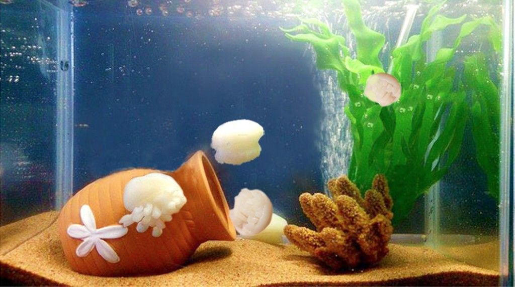 jellyfish-konjac2015-10-01 12.34.40