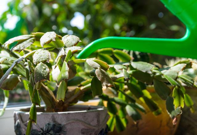 succulent-hydroponic-culture5