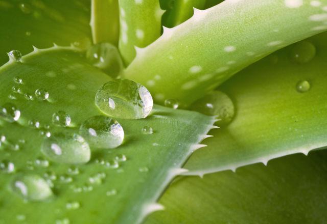 succulent-hydroponic-culture6