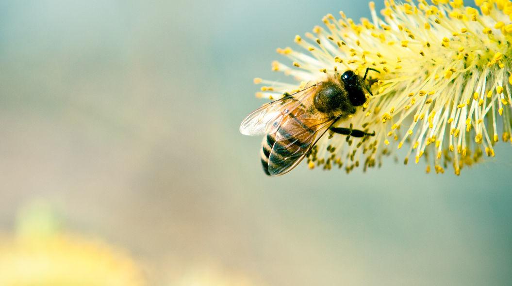 【夢占い】蜂の夢の意味とは?蜂に刺される夢には要注意!?