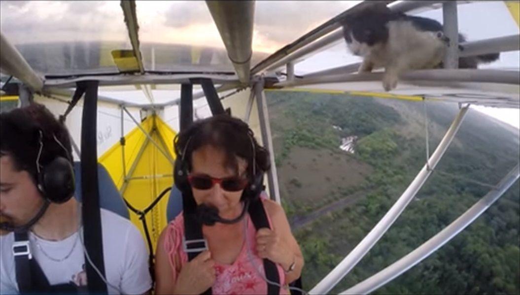 FireShot Capture 1415 - Remove cat before flight - YouTube_ - https___www.youtube.com_watch_R
