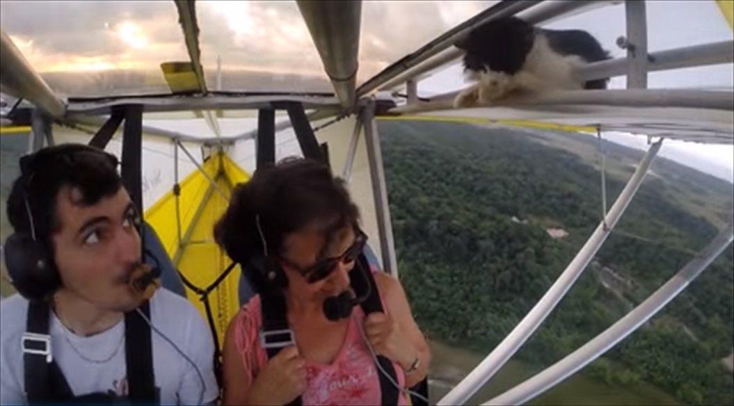 FireShot Capture 1419 - Remove cat before flight - YouTube_ - https___www.youtube.com_watch_R
