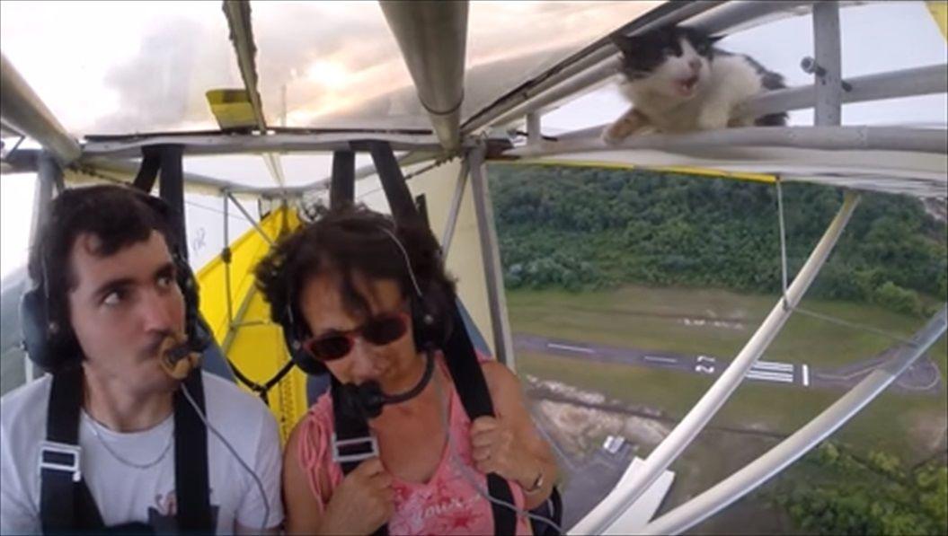 FireShot Capture 1420 - Remove cat before flight - YouTube_ - https___www.youtube.com_watch_R
