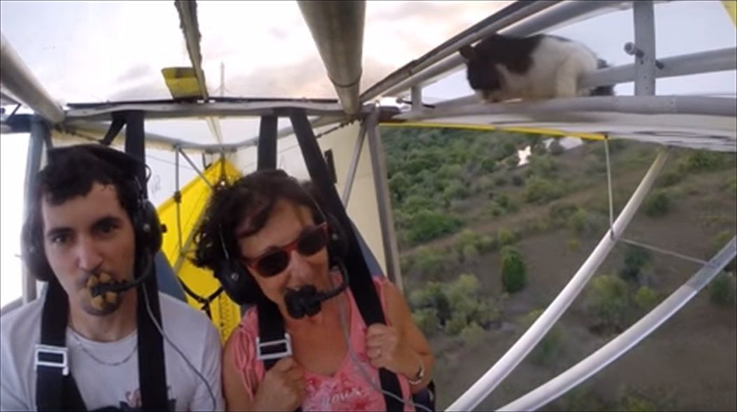 FireShot Capture 1422 - Remove cat before flight - YouTube_ - https___www.youtube.com_watch_R