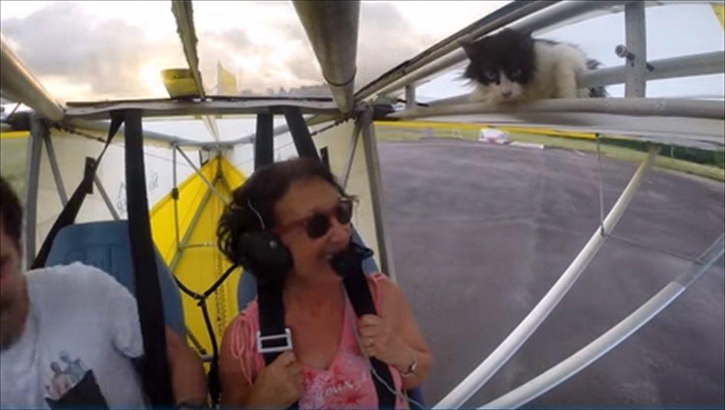 FireShot Capture 1424 - Remove cat before flight - YouTube_ - https___www.youtube.com_watch_R