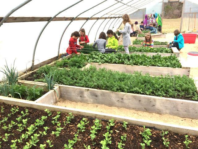 gardening-program