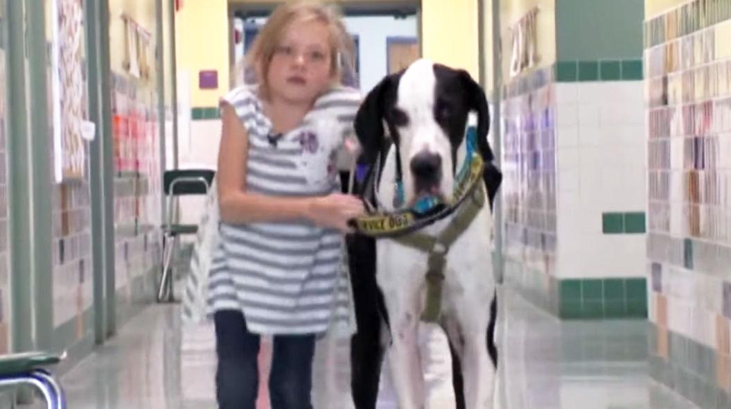 介助犬のおかげで、杖を使わずに歩けるようになった少女