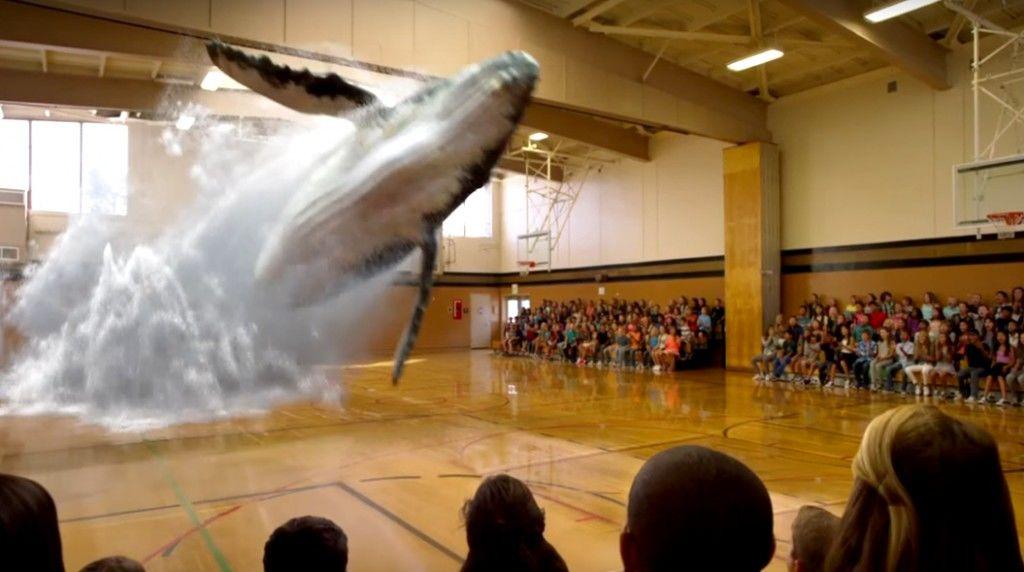 whalegymnasium2015-11-06 16.04.42
