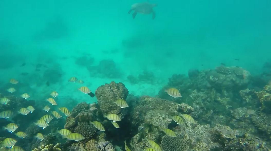 事故で墜落したドローンが、美しすぎる海の映像を記録していた・・・