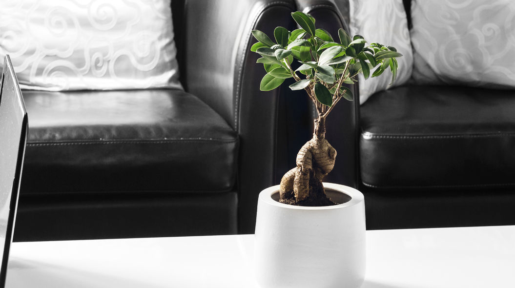 「ミニ盆栽」のススメ 仕事が手につかなくなるほどカワイイ