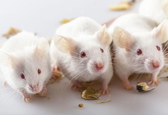 ネズミ 14