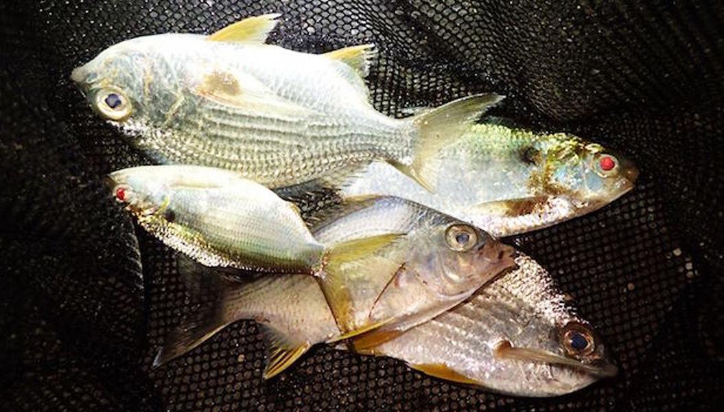 30年ぶりの大寒波。そのとき沖縄では「お魚フェス」が開催されていた!